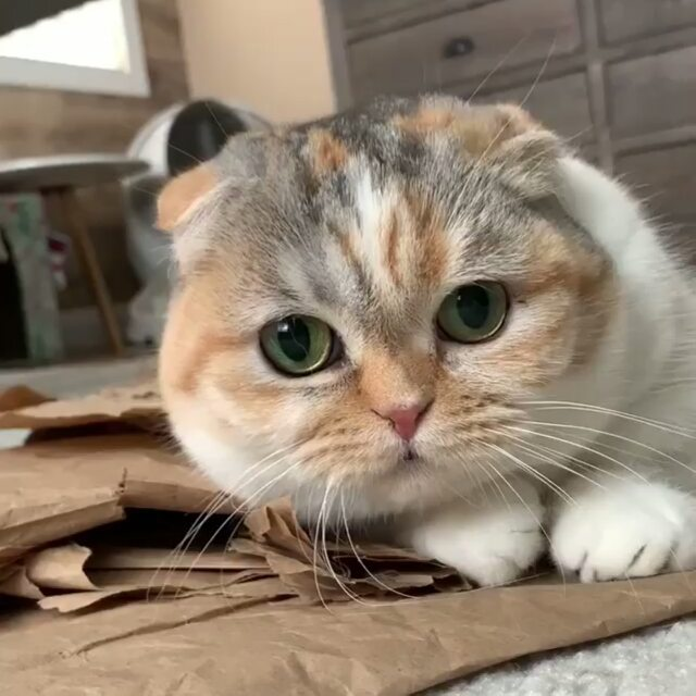 Nice, cute and funny cats!!!Why are cats this lovely?Are the…