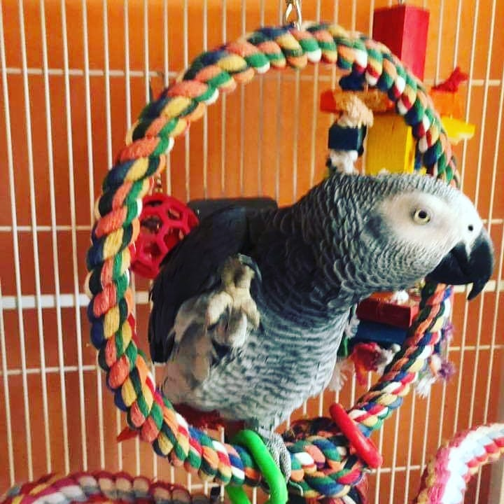 funnyparrot