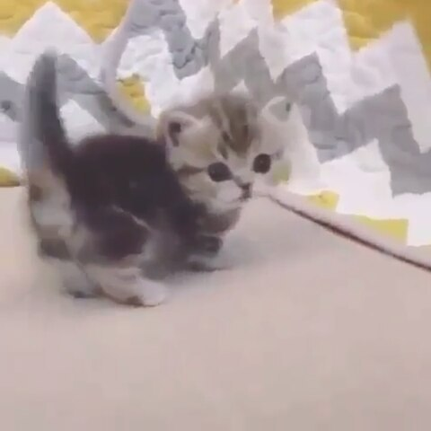 so cute baby… follow  and  for cut cats…. . . . . .