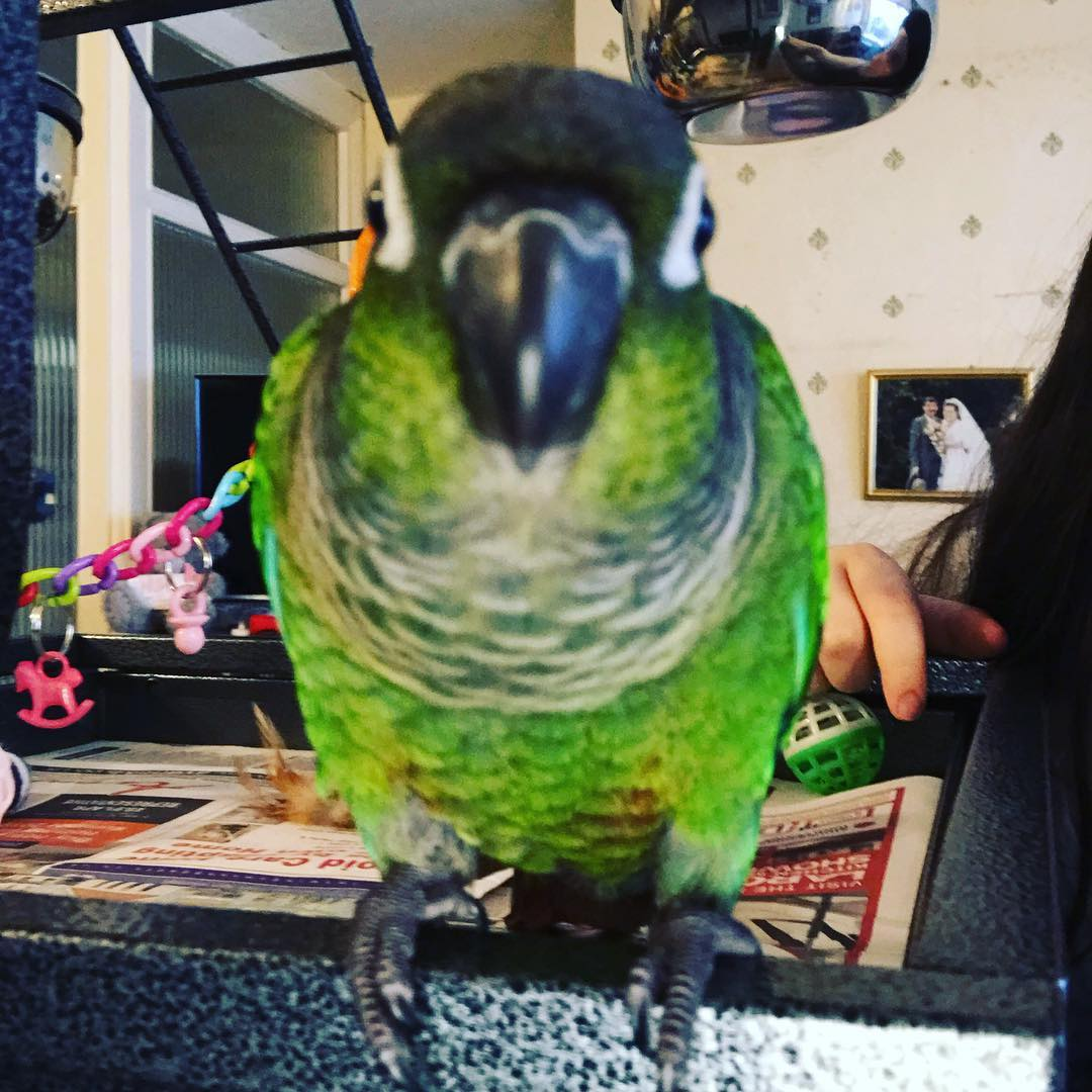 Hey guys I currently have a new Instagram for my little baby conure Oreo! If you