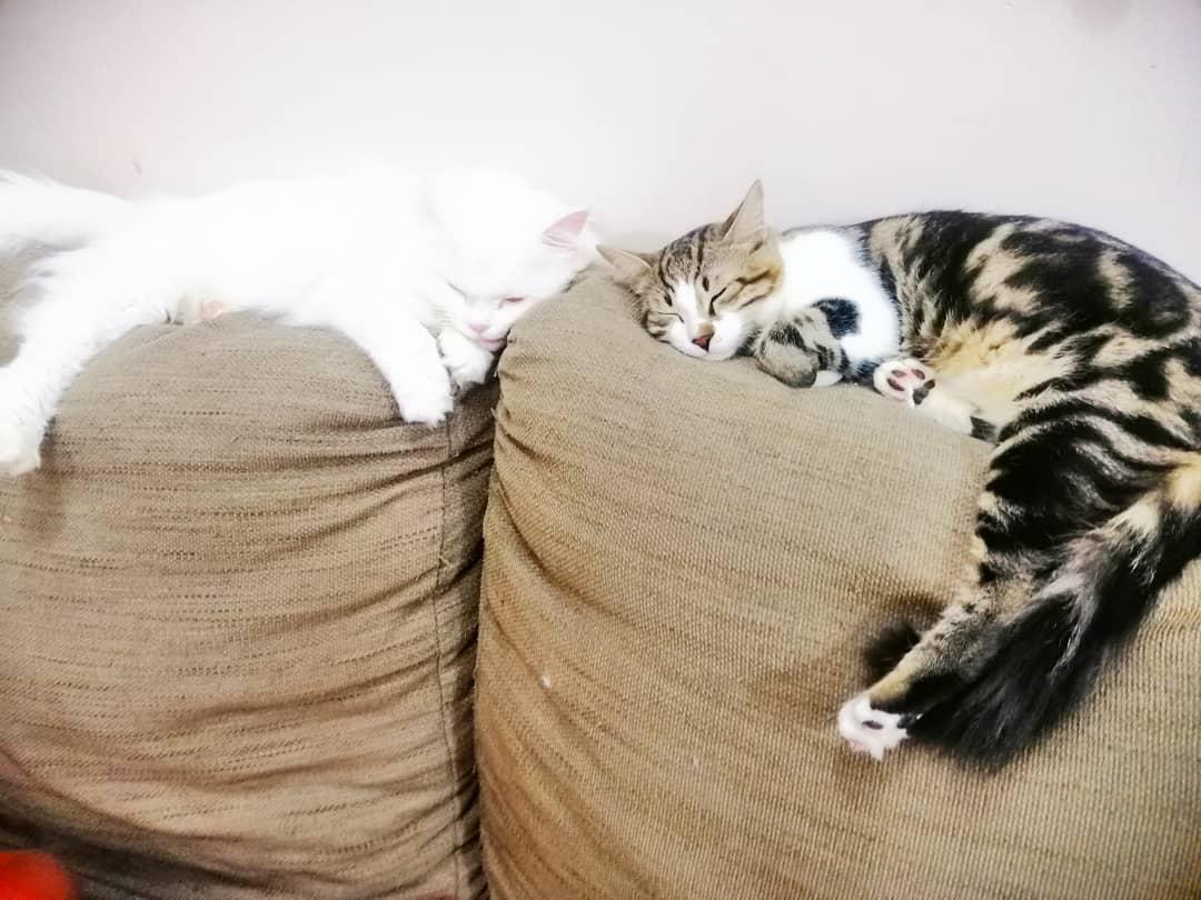 TIGER & KITTY