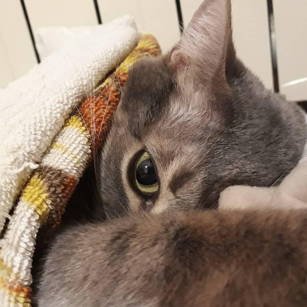 Miao! . . . . . . . .  .