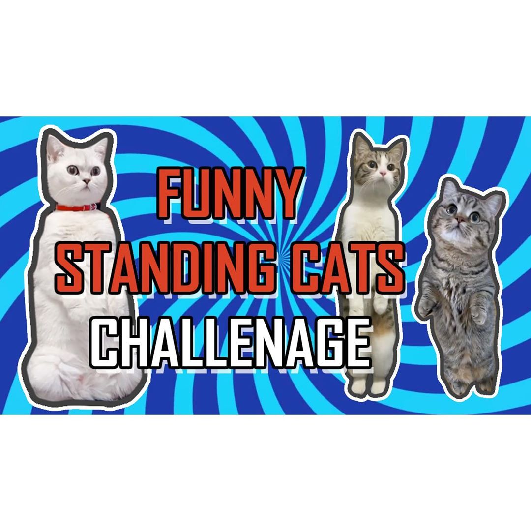 Isn't it funny when cats standing straight and staring and something? Check out