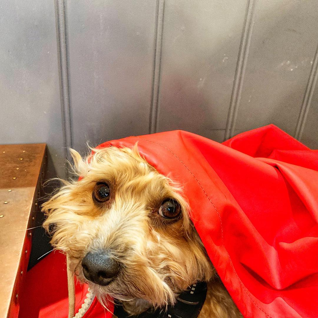 Here's Doris keeping dry yesterday at the fantastic  cafe! It is hidden away in